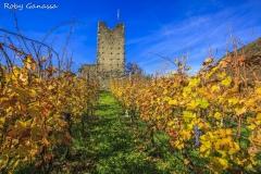 Vigneti e il Castel Grumello in autunno