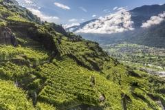 Terrazzamenti nei pressi di Castione Andevenno