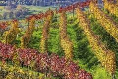 Montagna in Valtellina, vigneti in autunno