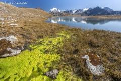 Valle del Braulio, l'Ortles m 3905 si specchia nel lago Umbrail