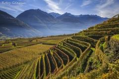 Terrazzamenti lineari a Bianzone in autunno