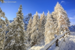 Nevicata al passo delle Erbe, tra gli alberi il Sass de Putia