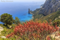 Sardegna_SelvaggioBlu_PrimaTappa16-2907