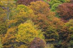 Il bosco sopra i Bagni Masino in veste autunnale
